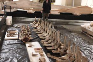 На побережье Флориды выбросило кита нового вида