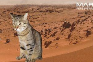NASA предлагает желающим почувствовать себя на Марсе