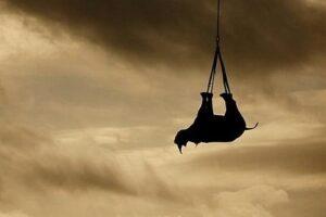 Носороги должны летать вверх ногами — исследование