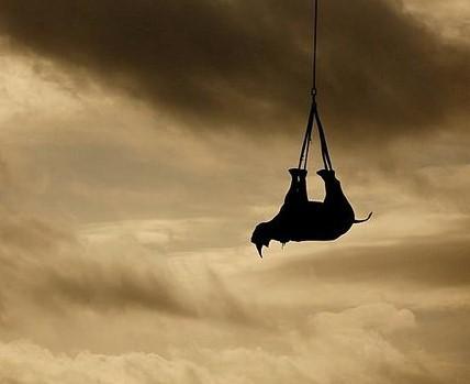 Носороги должны летать вверх ногами — исследование.Вокруг Света. Украина