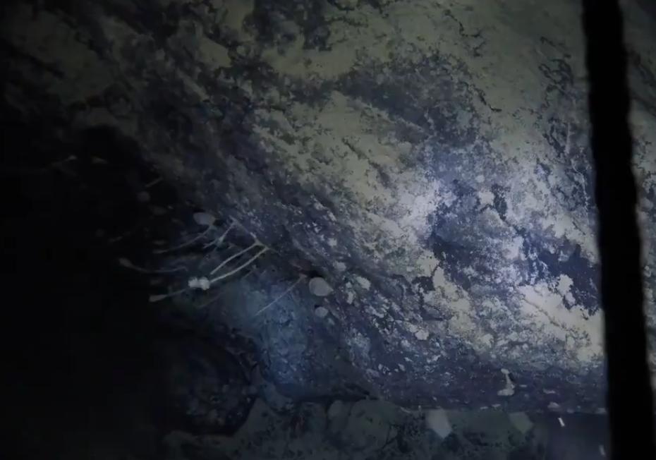В Антарктиде обнаружили морские губки под километровым слоем льда.Вокруг Света. Украина