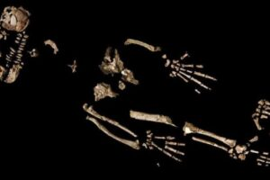 От Арди до Люси: как эволюция конечностей поставила наших предков на ноги