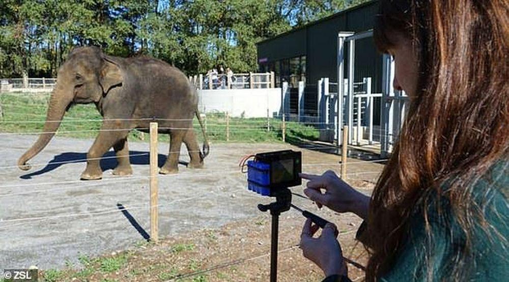 За индийскими слонами в дикой природе будут присматривать с помощью тепловизоров