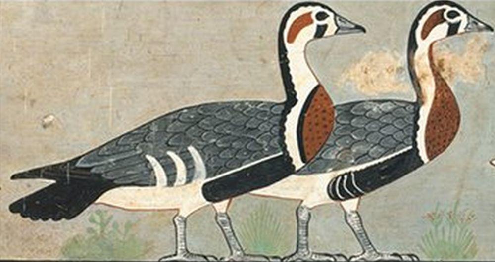 На рисунке из древнеегипетского захоронения обнаружили неизвестную ранее птицу.Вокруг Света. Украина