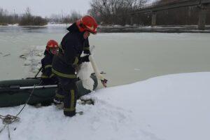 Во Львовской области спасли лебедей, примерзших ко льду