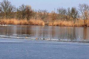 В заповеднике «Аскания-Нова» снова гибнут птицы