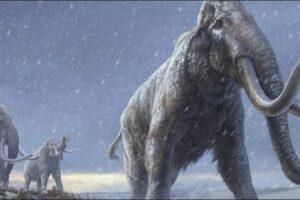 Ученые секвенировали ДНК мамонта возрастом более миллиона лет