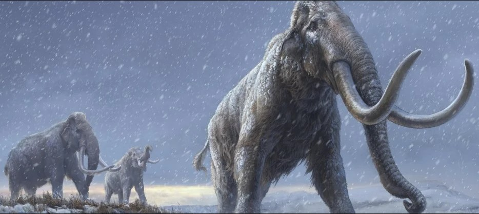 Ученые секвенировали ДНК мамонта возрастом более миллиона лет.Вокруг Света. Украина