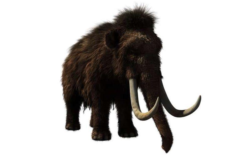 Шерстистых мамонтов истребили люди – исследование.Вокруг Света. Украина