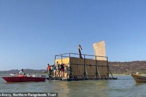 Редкого жирафа в Кении спасли с острова, который уходит под воду