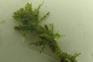 В английском заповеднике обнаружили растение, которому 460 млн лет