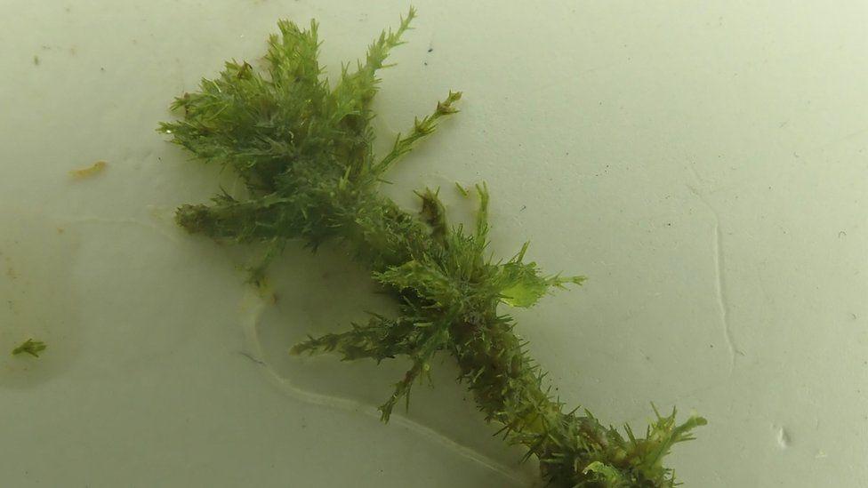 В английском заповеднике обнаружили растение, которому 460 млн лет.Вокруг Света. Украина
