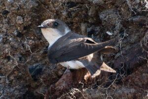 В Англии огромный птичий дом из песка вернет пернатых на родину