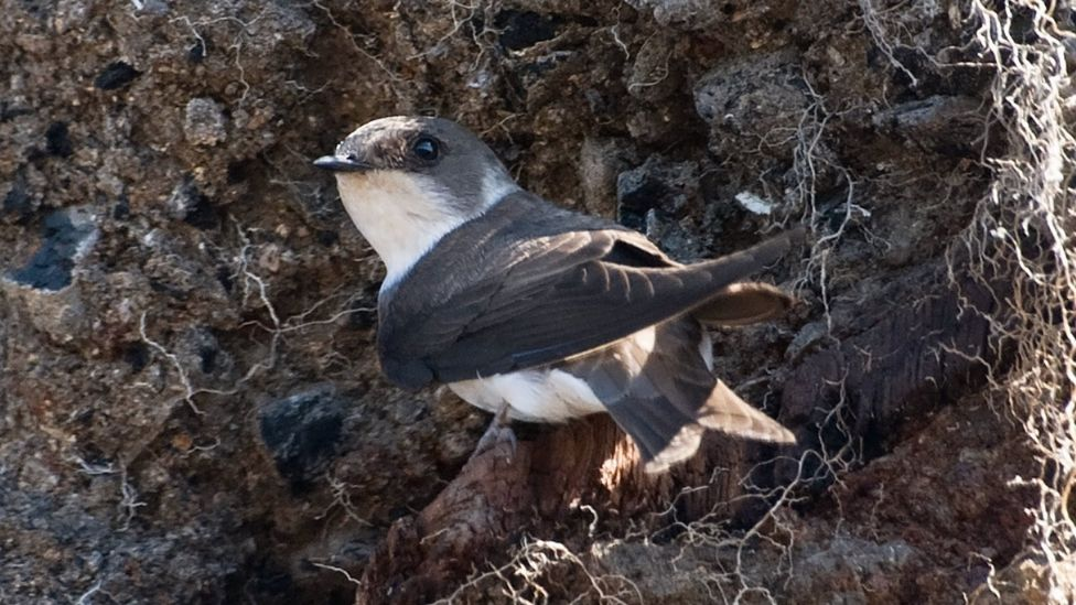 В Англии огромный птичий дом из песка вернет пернатых на родину.Вокруг Света. Украина