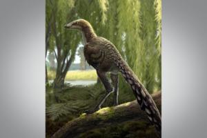 В Испании открыли новый вид хищных птицеобразных динозавров