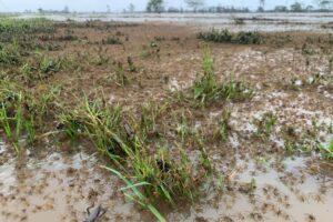 В Австралии нашествие змей и пауков: спасаются от наводнения