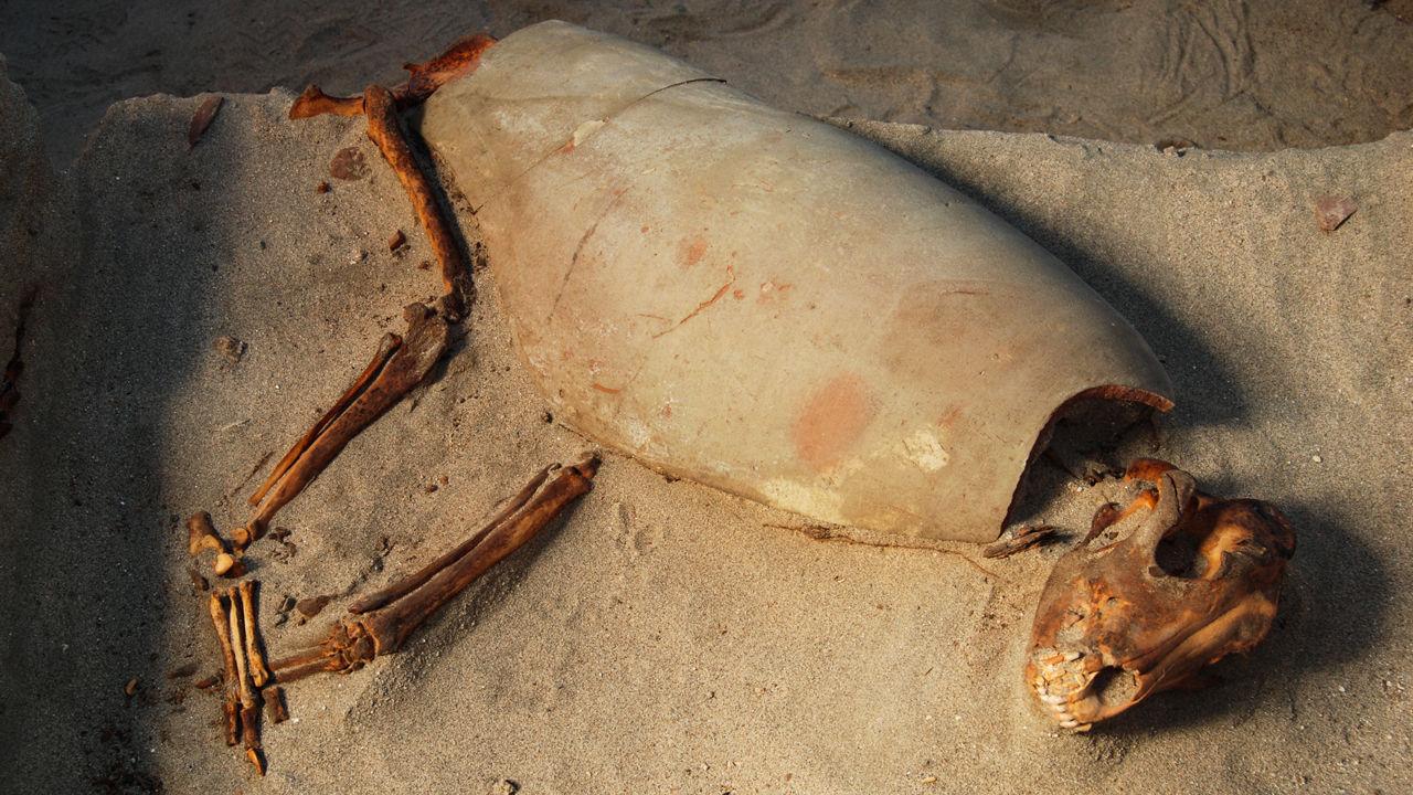 Археологи рассказали о связи людей и животных в древности