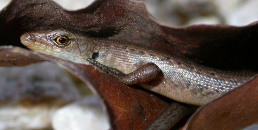 В Австралии признали вымершими 13 видов животных