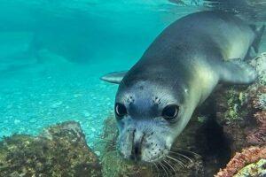 На Кипре биологи запечатлели секретный «роддом» редчайших тюленей