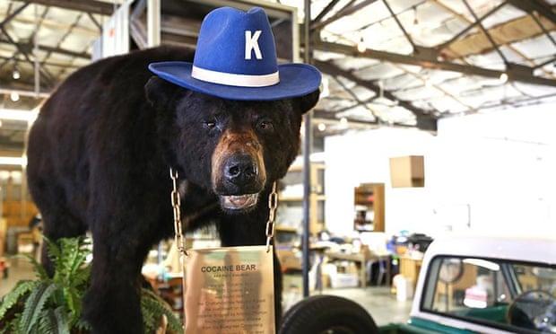 США снимут фильм о медведе, съевшем 40 кг кокаина. И это реальная история