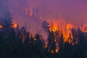 Дым лесных пожаров более вреден, чем выбросы от автомобилей