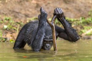 В ходе эволюции люди научились расходовать воду эффективнее, чем приматы
