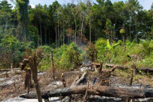 Площадью с Францию: сколько тропического леса потеряла планета