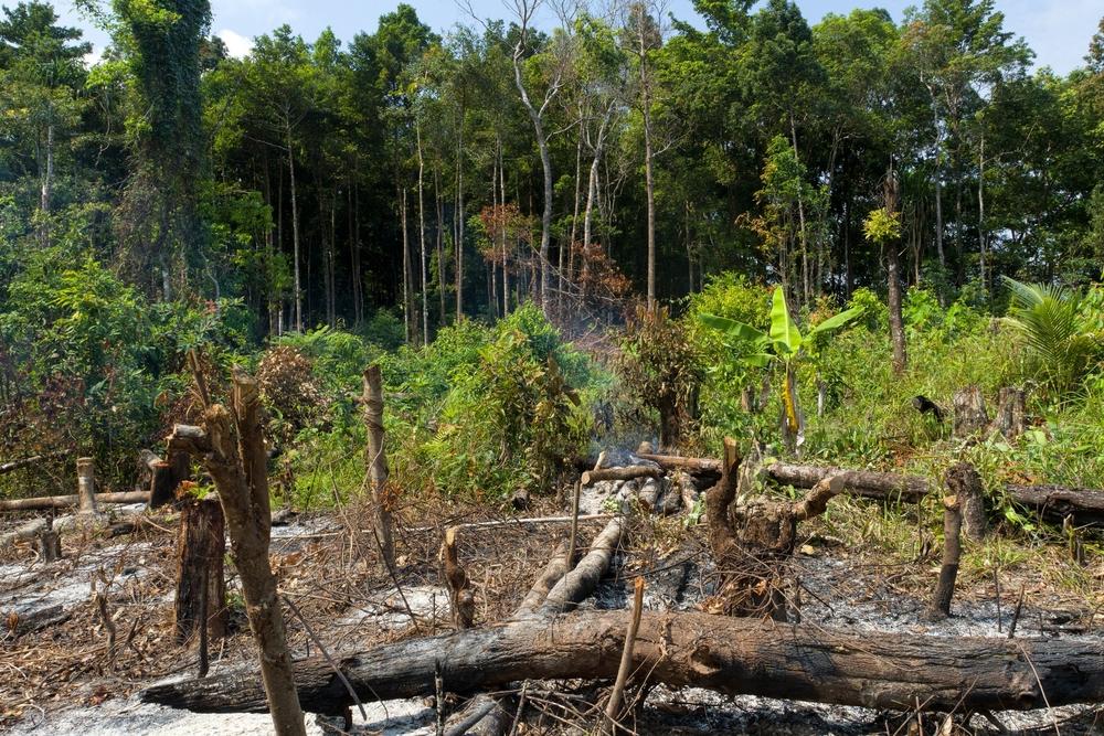 Площадью с Францию: сколько тропического леса потеряла планета.Вокруг Света. Украина