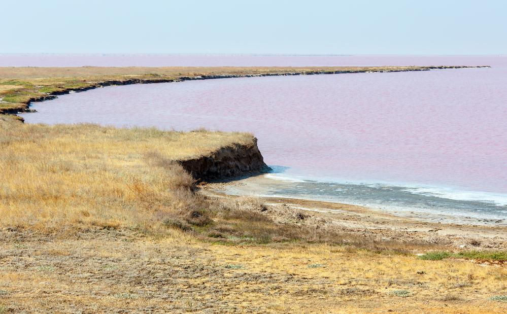На озере Сиваш от птичьего гриппа погибли 90 лебедей.Вокруг Света. Украина