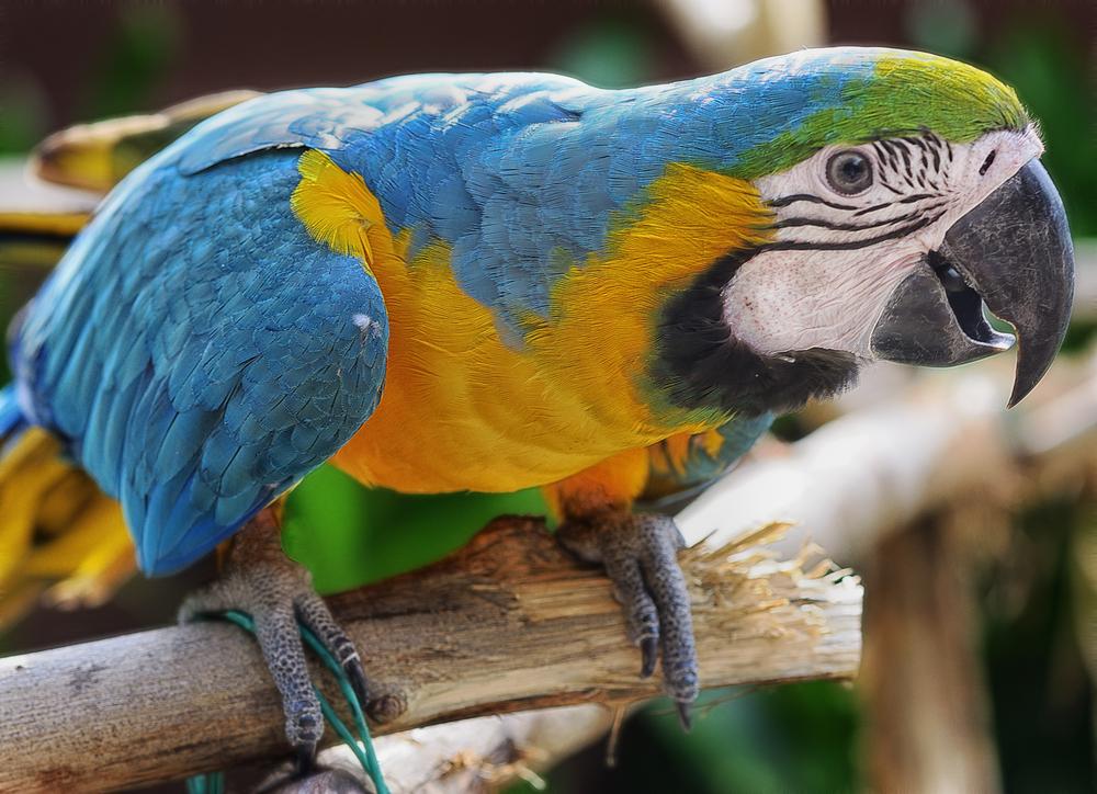 Зачем индейцы пустыни Атакама мумифицировали попугаев?.Вокруг Света. Украина