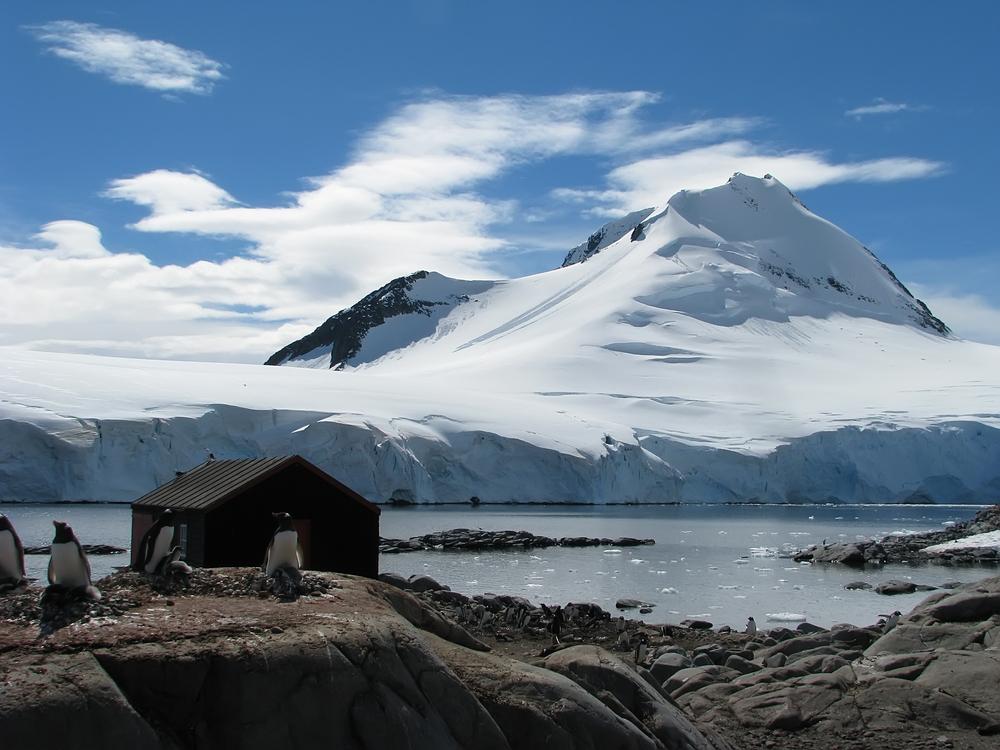 Живут ли в Антарктиде насекомые? Да, и они умеют делать антифриз.Вокруг Света. Украина