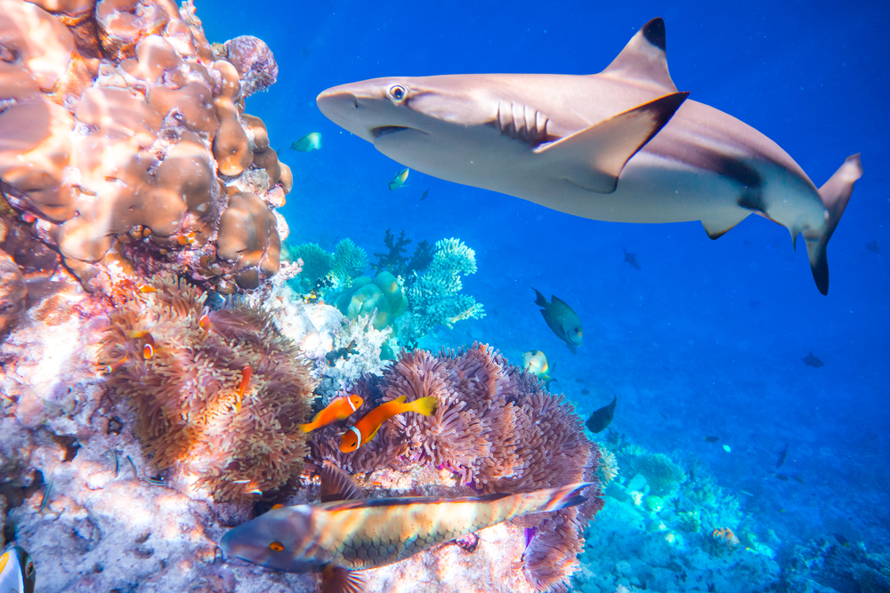 Акулы играют решающую роль в восстановлении экосистем