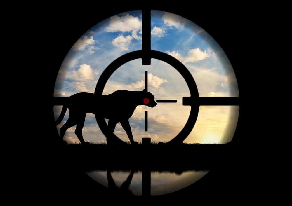 Искусственный интеллект предскажет, где появятся браконьеры.Вокруг Света. Украина