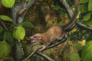 В Монтане обнаружили окаменелости древнейших приматов: им 66 млн лет