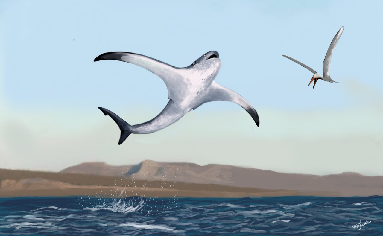 В Мексике обнаружили неизвестный вид древней крылатой акулы.Вокруг Света. Украина