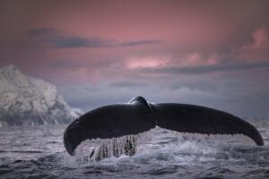 Когда-то киты были оленями