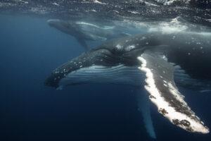 Зачем морские животные плавают кругами