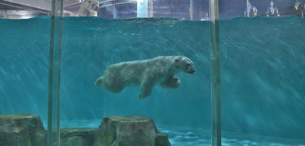 В Китае открылся отель с белыми медведями
