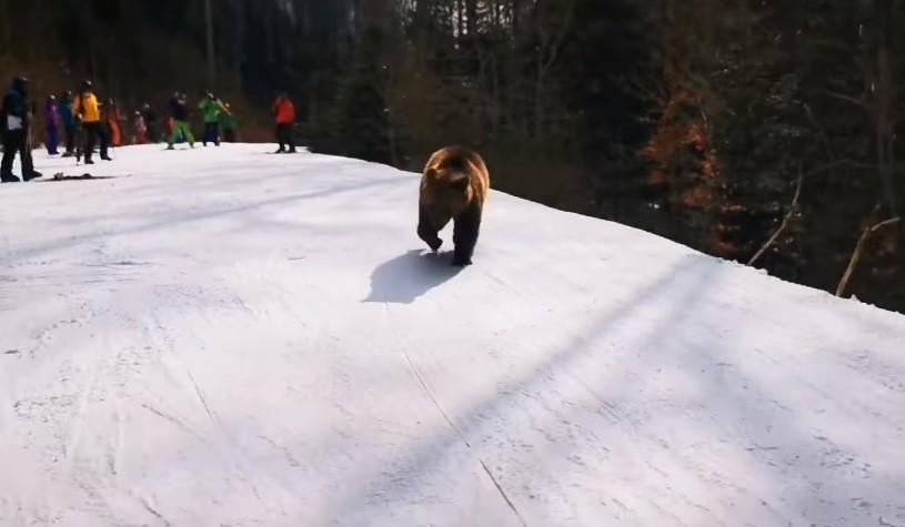 В Румынии лыжный инструктор спас группу от медведя.Вокруг Света. Украина