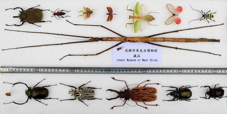 Какое насекомое самое большое на Земле.Вокруг Света. Украина
