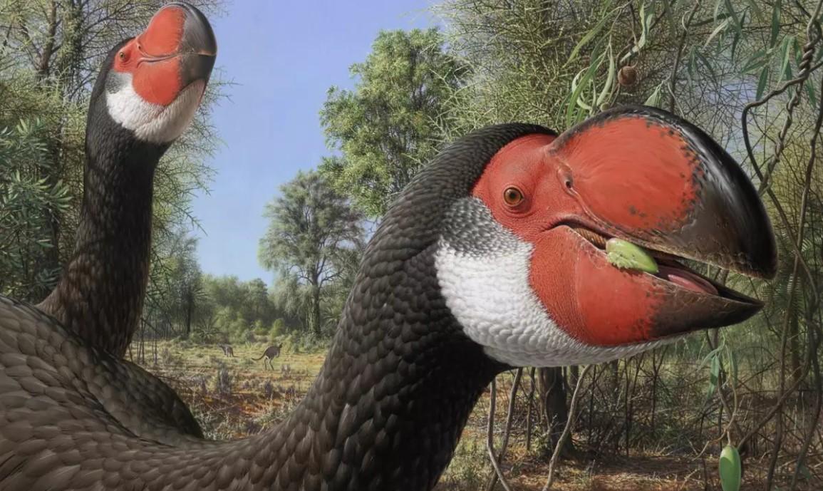 Палеонтологи впервые изучили мозг самых больших птиц в истории.Вокруг Света. Украина