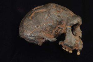 Острова в Юго-Восточной Азии были местом встречи пяти видов древних людей