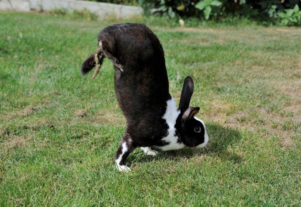 У кроликов и кенгуру нашли общий