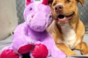 Уличный пес стал вором-рецидивистом в магазине игрушек