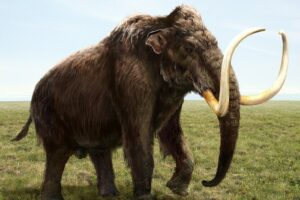 Установлен точный возраст останков мамонта Маунт-Холли: им 12 800 лет