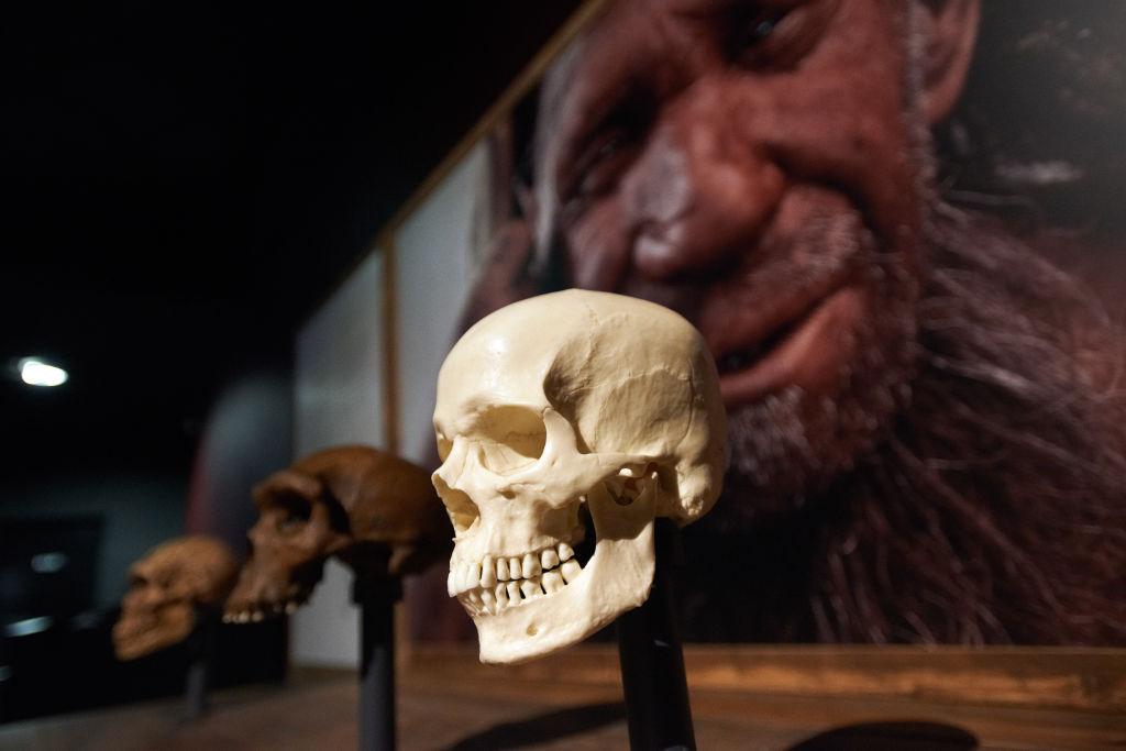 Почти как люди: неандертальцы и предки человека могли общаться на одном языке.Вокруг Света. Украина