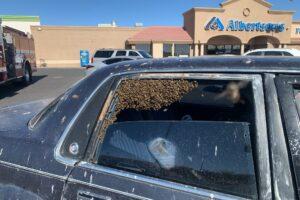 В США 15 тысяч пчел залетели в машину, стоящую у супермаркета