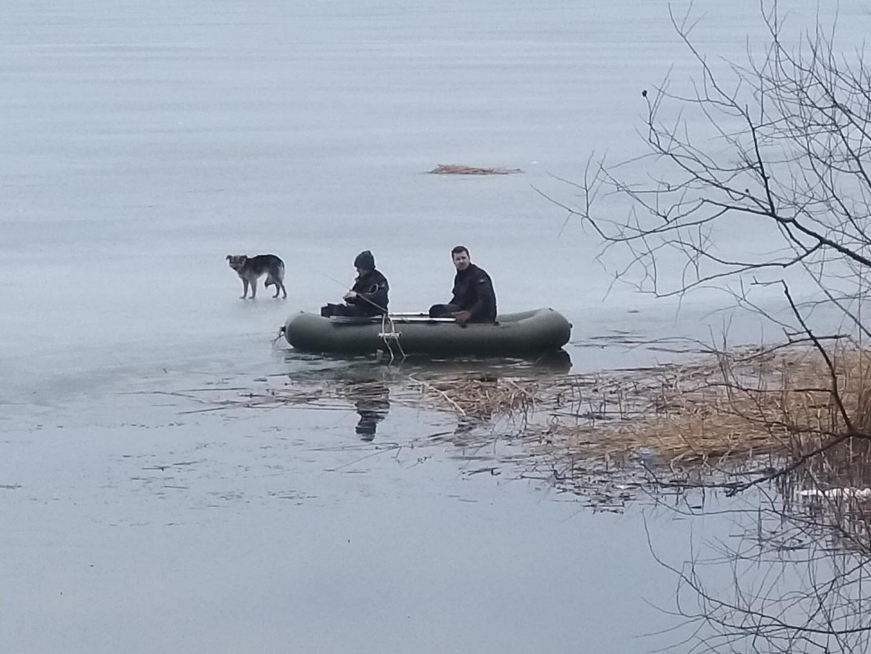 В Харьковской области собака провела неделю на речной льдине