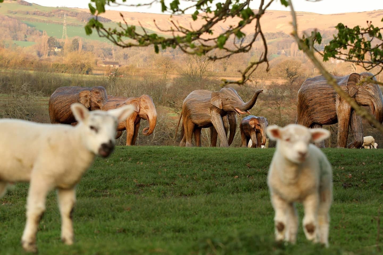 30 деревянных слонов отправятся в тур ради борьбы с потеплением.Вокруг Света. Украина
