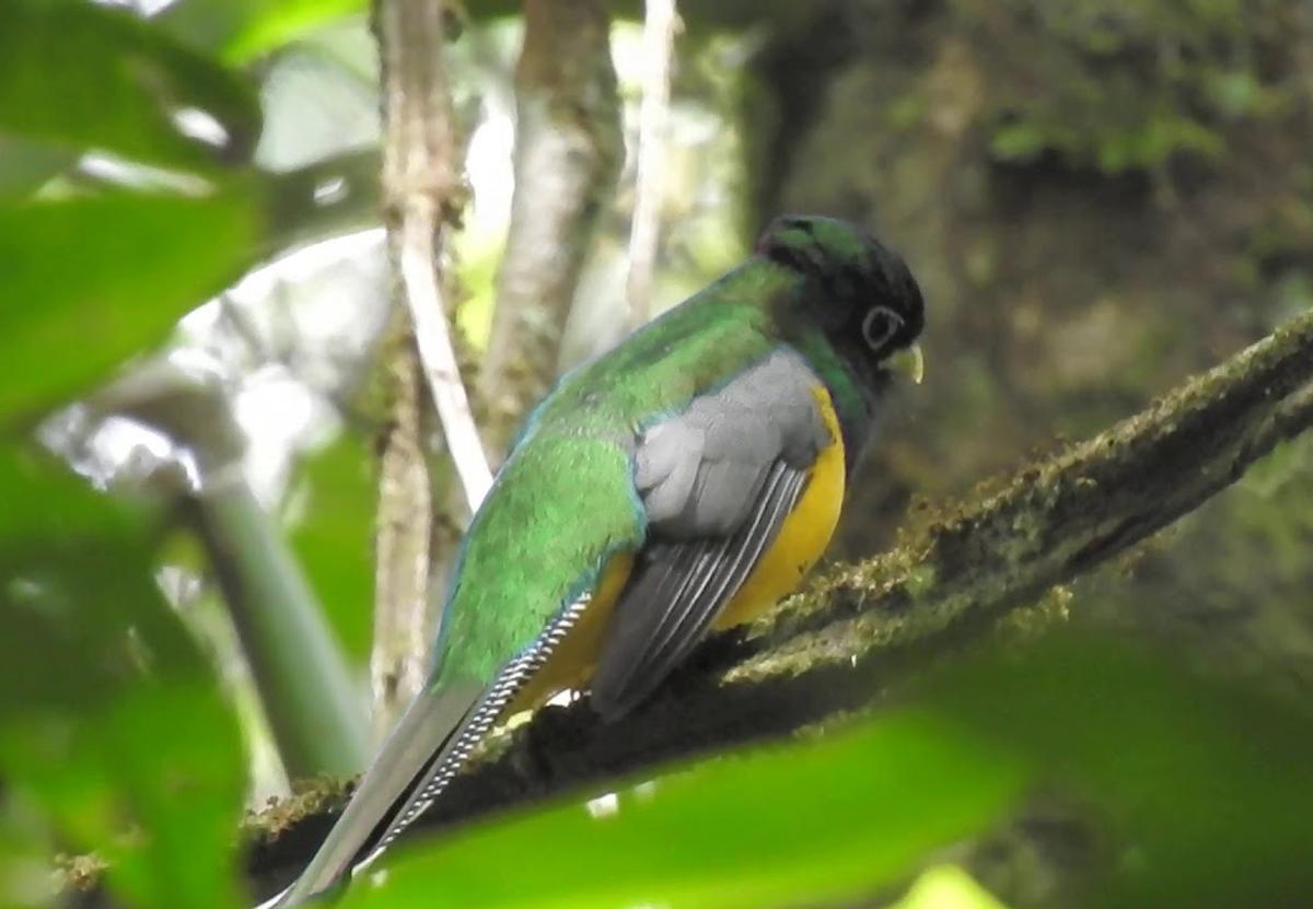 Орнитологи открыли в Бразилии новый вид птиц